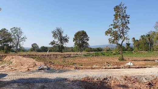 ขายด่วนที่ดิน สวน อ.นาดี จ.ปราจีนบุรี เนื้อที่ 79 ไร่